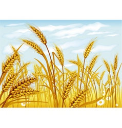 Wheat in the field vector