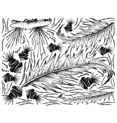 Hand drawn of sea vegetables or seaweed on white b vector