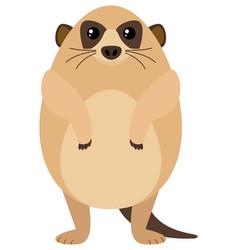 Meerkat with round body vector