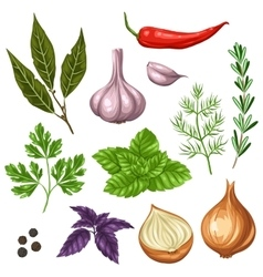 Set of various stylized herbs and spices vector image
