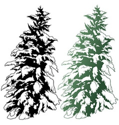 Snowy conifer vector