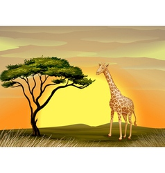 a giraffe under tree vector image