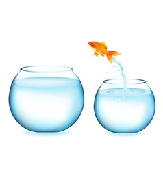 Jumping goldfish vector