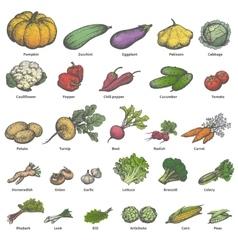 big set different colored ripe vegetables vector image
