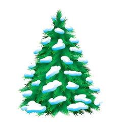 Green fir tree vector