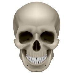 Human skull front view Digital on white vector image
