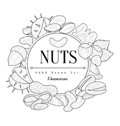 Nuts collection vintage sketch vector