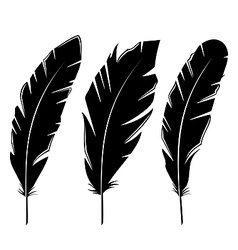 Set feathers isolated on white background vector