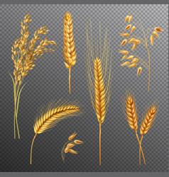 realistic cereals transparent background set vector image vector image