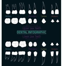 Teeth infographic 08 b-17 vector