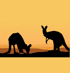 Two kangaroo scenery silhouette collection vector