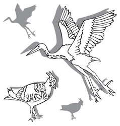 Birds heron and lapwing vector