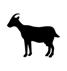 Silhouette of goat vector
