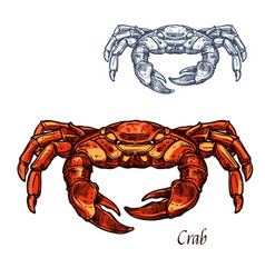 Crab sea animal isolated sketch for sefood design vector