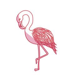 Silhouette beauty and exotic flamingo bird animal vector