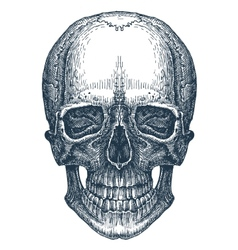 skull logo design template fresh death vector image