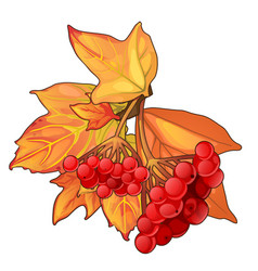 Autumn maple leaves and sprig of red berries vector