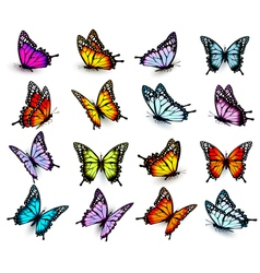 Collection of colorful butterflies flying in vector image vector image