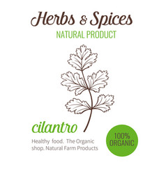 Hand drawn cilantro vector