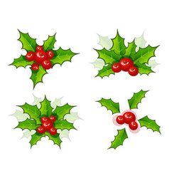 holly leaves vector image