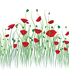 poppy back vector image