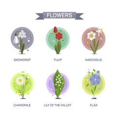 Flowers set isolated on white background vector image