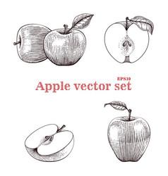 apple set hand drawing vector image