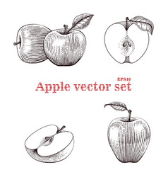 apple set hand drawing vector image vector image