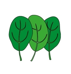 Cartoon of green fresh spinach vector