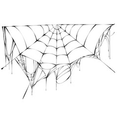 black spiderweb on white background vector image