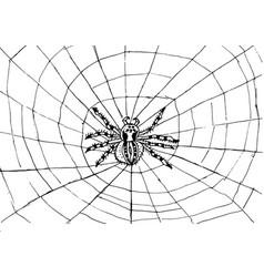 Spider web texture background vector