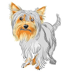 Yorkshire terrier sketch vector