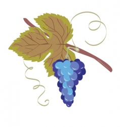 Grape blue vector