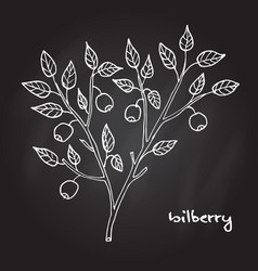 Bilberry ripe berry vector