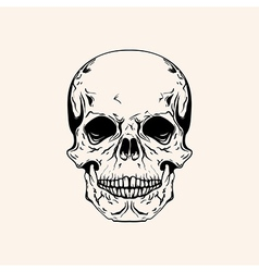 Hand drawn sketch scull tattoo line art vintage vector