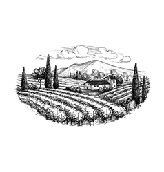 Hand drawn vineyard landscape vector