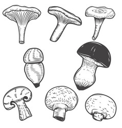 Set of hand drawn mushrooms isolated on white vector