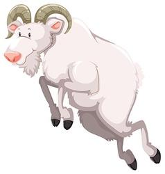 White goat vector image