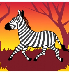 zebra animal vector image