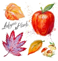 Autumn leaves mushrooms and apple vector