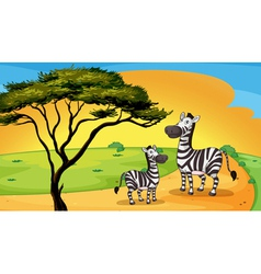 two zebra under tree vector image vector image