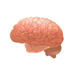 Realistic human brain isolated on white background vector