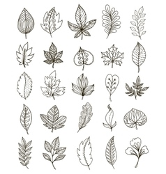 Hand Drawn Foliage Monochrome Set vector image