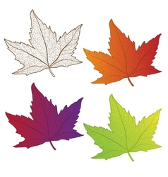 Collection colorful autumn leaves isolated vector image vector image