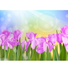 Spring easter with beautiful violet tulips eps 10 vector