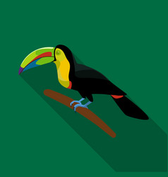 Mexican keel-billed toucan icon in flat style vector