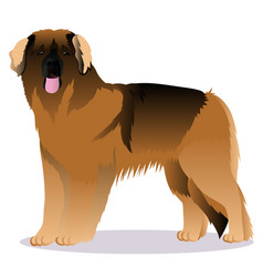 Leonberger dog vector