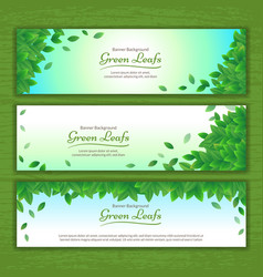 Set of nature background banner with green leaf vector