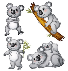 A group of koalas vector image