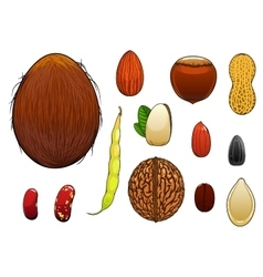 Realistic nuts seeds and beans in cartoon style vector image vector image